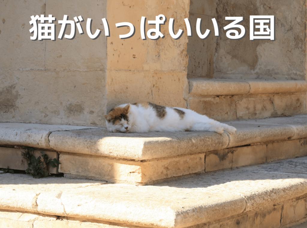 猫がいっぱいいる国