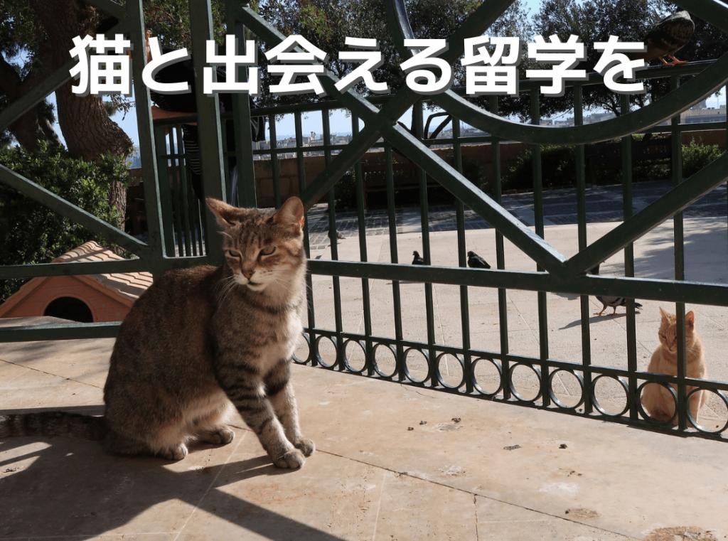 猫と出会える留学を
